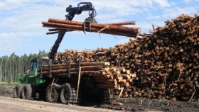 Crecimiento sostenido de la cadena forestal contribuye con fuerte impacto a la economía uruguaya