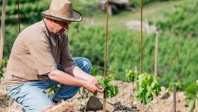 7 prácticas fundamentales de la viticultura ecológica