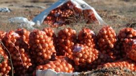 Cebolla con valor agregado: un desafío regional para la zona franca BB-CR