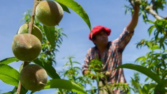 El RENATRE aumentó la prestación por desempleo para los trabajadores rurales a 21.600 pesos