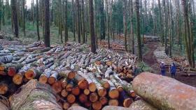 El 80% de la actividad forestal está parada