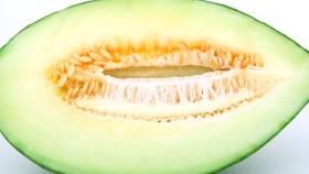 Mejorar la presencia de polinizadores en el cultivo del melón