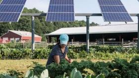Agrovoltaica: Energía Solar, Desarrollo y Agricultura Sostenible