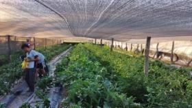 El Polo Hortícola de Conhello crece en producción