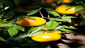 Mandarinas para todos los gustos