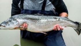 China será la tercera potencia en la carrera por la producción de salmón Atlántico en plantas en tierra en 2030