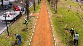 Plan de Forestación: la Ciudad plantará más de 16 mil árboles durante 2021