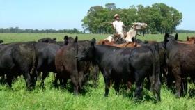 CNA 2018: el Indec presentó los resultados preliminares en ganadería
