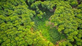 Los supermercados ya no pueden vender alimentos vinculados a la deforestación ilegal