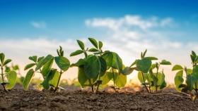 El rol clave de la fertilización para lograr más rindes de soja