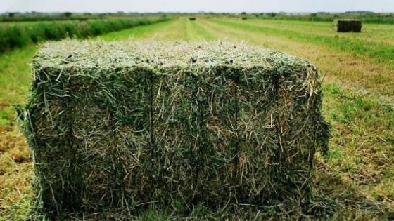 Respuesta a fósforo y azufre en alfalfa en un suelo con larga historia agrícola