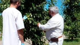 Chubut avanzó en políticas de sanidad vegetal junto a productores e instituciones