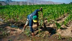 IICA: Producción inocua y sostenibilidad, claves para la agricultura post pandemia