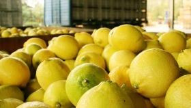 Limones: Argentina envía las primeras 24 toneladas a China