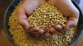 Fuertes bajas para el precio de la soja en medio de un desplome global