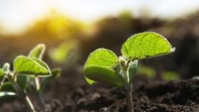 Horizonte Europa financiará la investigación sobre la edición del genoma en la agricultura
