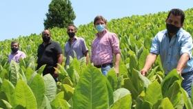 Refuerzan plan de trabajo con municipios para diversificar chacras de tabacaleros