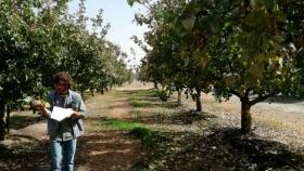 Un joven profesional sanjuanino se capacita en pistacho en EEUU