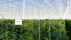 El grupo de invernaderos holandés da la bienvenida a cuatro nuevos miembros
