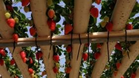 FruitHydroSinni: