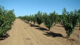 Control y monitoreo del riego en cerezos: su impacto en el potencial de producción
