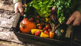 Insumos nacionales para agricultura orgánica con alto potencial en México