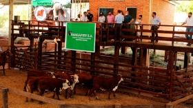 Récord de animales en el tercer remate ganadero de Misiones