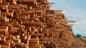 Viviendas en madera: el material estigmatizado por el que quiere apostar el gobierno