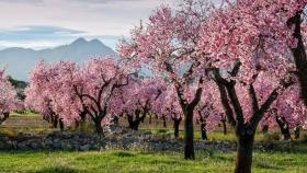 La agricultura crece en España