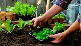 Pergamino: Movilizar la economía local a través de la agroecología