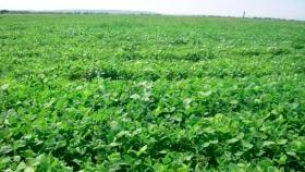 La Rioja concederá una ayuda a la remolacha en la función de los precios del azúcar