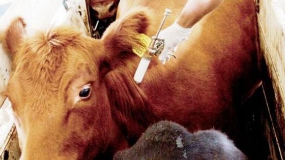 """El estatus sanitario deja a la """"vaca china"""" en stand by"""