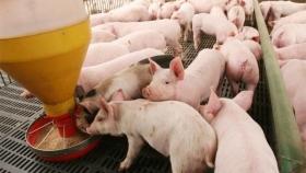 El USDA estima que China importará más carne vacuna durante el 2021