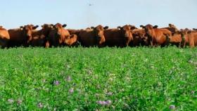 Los ganaderos invierten en animales e insumos