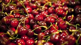 Río Negro es la principal provincia exportadora de cerezas