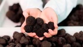 Pensar nuevas inversiones en la cuarentena: el cultivo que se exporta a 2.000 dólares el kilo
