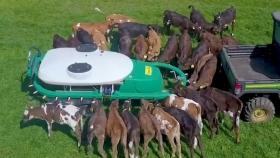 Un dispenser móvil de leche es la novedad para alimentar a 30 terneros al mismo tiempo