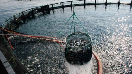 Agricultura destinará $66 millones para impulsar proyectos productivos de acuicultura en todo el país