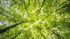 Chile obtiene tasa récord en emisiones de bonos verdes impulsando energía solar, eólica y mitigación al cambio climático