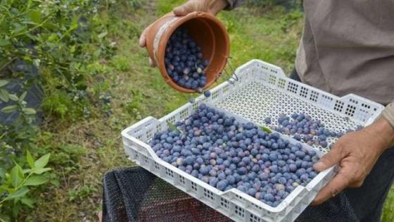 Agricultura distingue con el Sello de Calidad