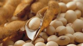 Expectativas de buenos rendimientos para la soja en Uruguay