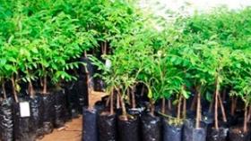 Entregaron 10 mil plantas de nogal a productores locales riojanos