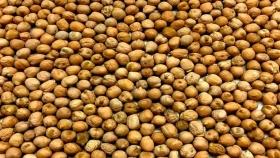 Legumbres: las especialidades, una alternativa a los commodities