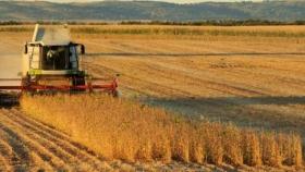 Campaña 2020/2021: escasas modificaciones en alquileres agrícolas