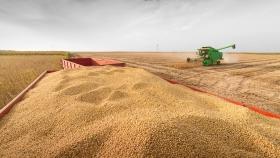 Soja: baja estimación internacional para la cosecha Argentina