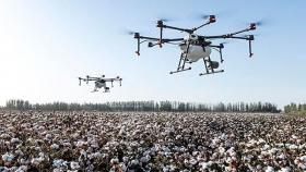 De las pirámides a los drones y la sostenibilidad: las cuatro claves del paisajismo moderno