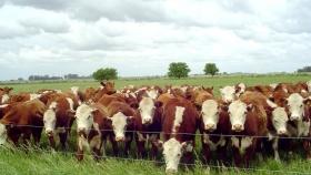 La siembra de pasturas gana lugar en ganadería