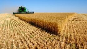 El 70,9% de la renta del trigo es para el Estado