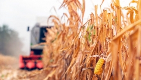 El maíz sudamericano volverá a dominar el comercio internacional en 2019/20