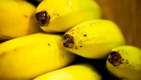 Formosa: Productores de banana deben inscribirse en el Renspa